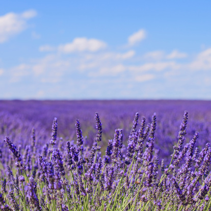 Save Time for Wine During Sequim Lavender Weekend!