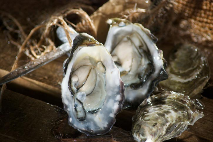 OysterFest - Oct. 5th – 6th Mason County Fair Grounds, Shelton WA