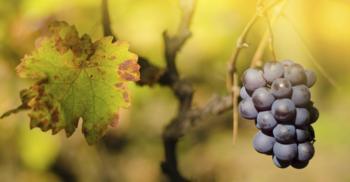 Harvest WineTour 2013